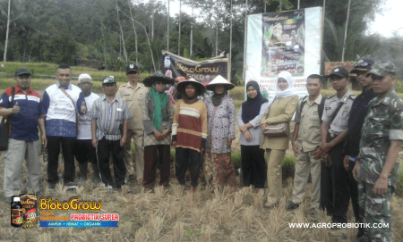 Biotogrow untuk tanaman padi
