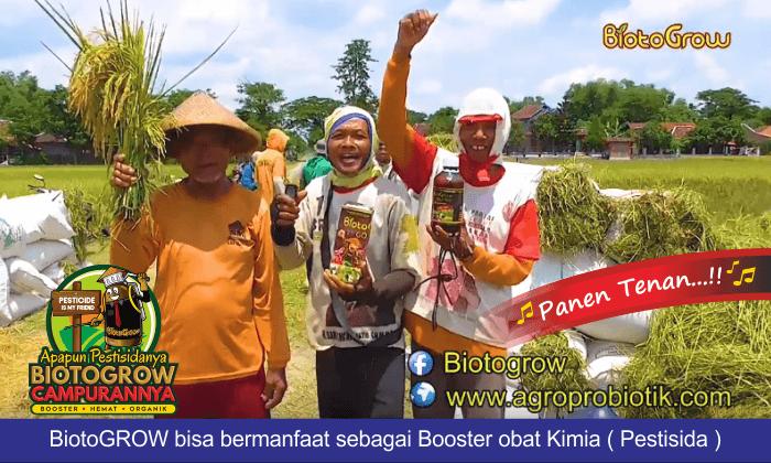 hama tanaman padi teratasi panen meningkat 3