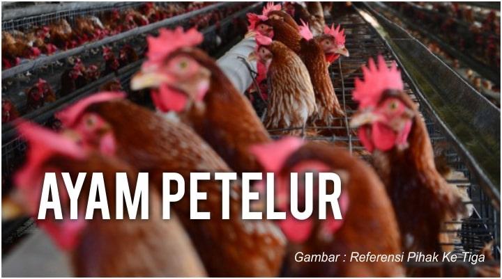 Ayam Peterlu