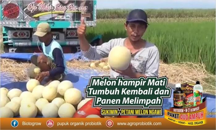 pupuk tanaman melon biotogrow