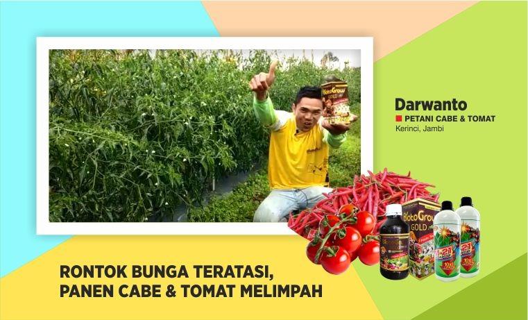 obat rontok bunga cabai & tomat