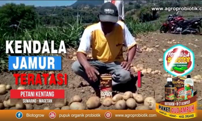 pupuk tanaman kentang