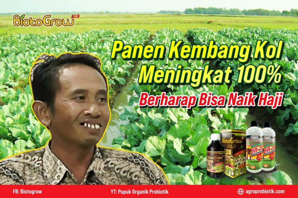 Panen Kembang Kol Melonjak 100% !! Bongkar Kunci Rahasia Petani Disini!! Web